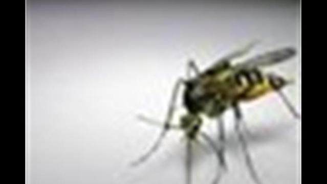 Erie County Receives $38,338 For West Nile Virus Control