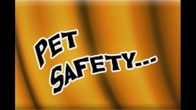 Outdoor Safety Tips for Dogs