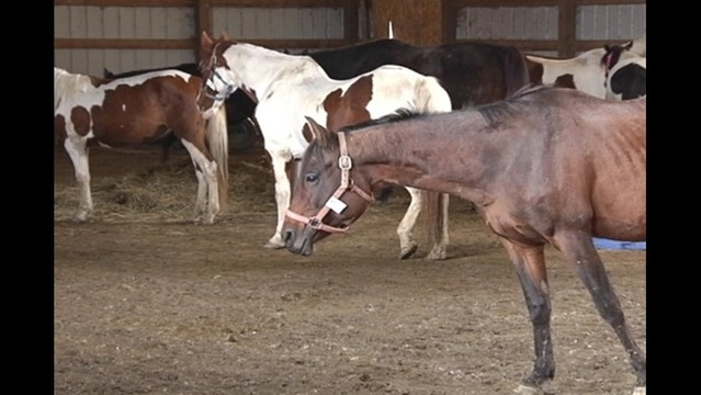 Horses Recover at Anna Equine Center