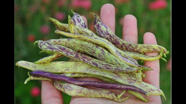 Heirloom vegetables: Why you'll grow to love them, and love to grow them