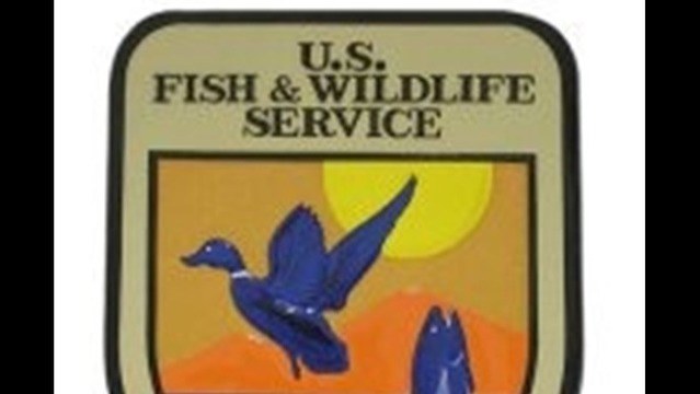 U.S. Fish and Wildlife Service Offers Online Information Sessions On Proposal to List Northern Long-eared Bat as Endangered