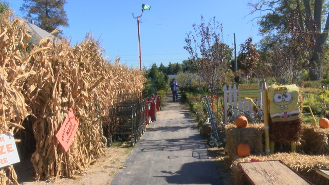 Mason Farms, Pumpkintown is an October hot spot