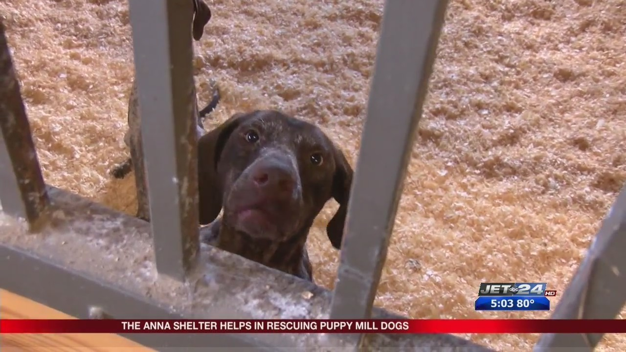 Anna Shelter Assists To Save Almost 100 Dogs From Washington County