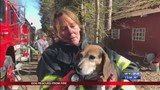 Firefighters save dog in Guys Mills